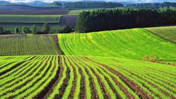 ТОП-5 областей Украины с самой высокой зарплатой в сельском хозяйстве фото, иллюстрация