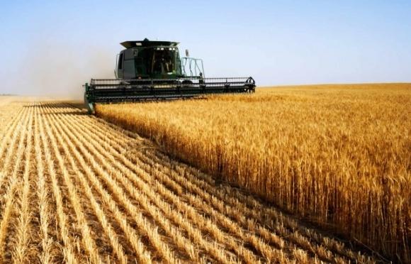 Працівники сільського господарства в 2019 році відпрацювали найбільшу кількість годин, — Держстат фото, ілюстрація