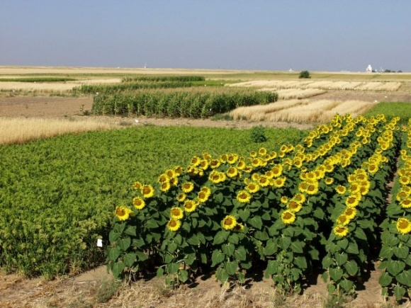 Урожайность почти всех культур в 2020 г. снизилась, — ННЦ фото, иллюстрация
