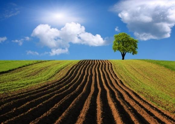 Законопроект об обороте сельхозземель в Украине практически готов – Мартынюк фото, иллюстрация
