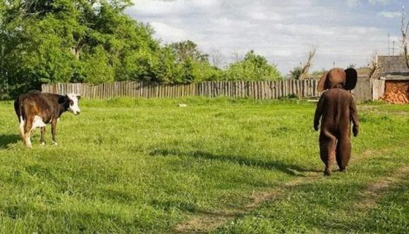 Лайфхаки тижня: підзаробіток для фермерів і стійкі до АЧС свині фото, ілюстрація