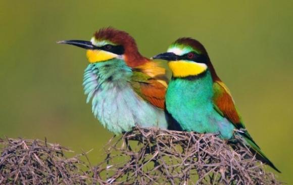 В Україні масово знищують гарного дикого птаха: заважає бізнесу фото, ілюстрація