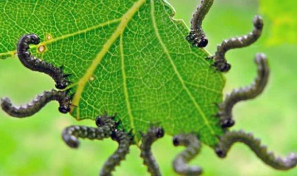 Ученые сделали революционное открытие в защите сельхозкультур без пестицидов фото, иллюстрация