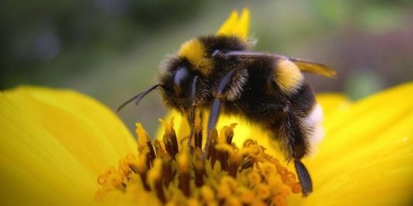 Вчені наблизилися до створення нетоксичних для бджіл та джмелів пестицидів фото, ілюстрація