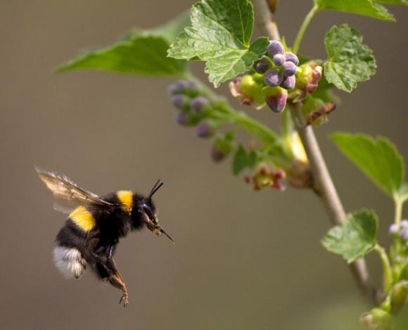 Винайдено інсектицид, який нищить шкідників, але не чіпає бджіл фото, ілюстрація