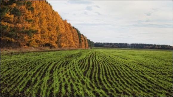 Українські аграрії засіяли озимими три чверті запланованих площ фото, ілюстрація