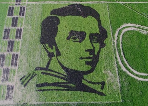Фермеры Скадовского района создали настоящий шедевр среди рисового поля фото, иллюстрация