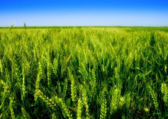 «UKRAVIT» предлагает аграриям новую услугу — трейдинг фото, иллюстрация