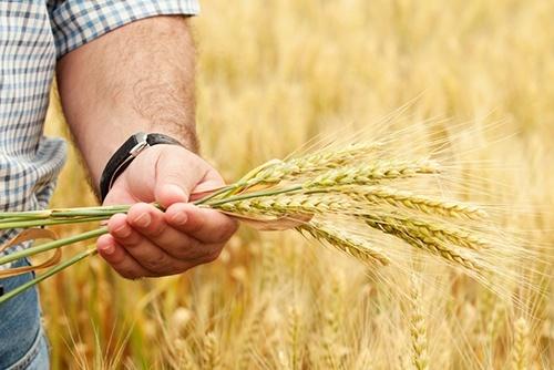 В Украине будут расширять бизнес-возможности работы с аграрными расписками фото, иллюстрация