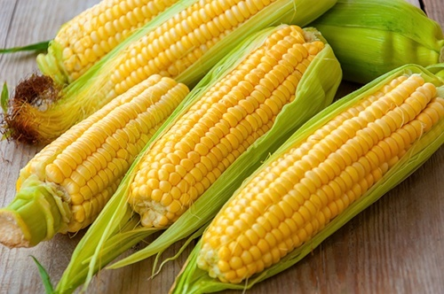 Індія буде імпортувати кукурудзу з України фото, ілюстрація