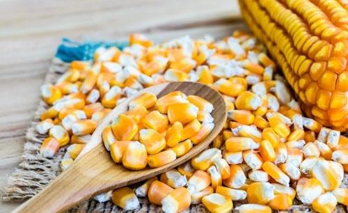 В ЄС не доберуть насіння кукурудзи фото, ілюстрація