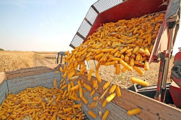 Україна планує експортувати 27 млн тонн кукурудзи у 18/19 МР, - УЗА фото, ілюстрація