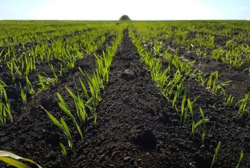 2 млн га земель в Україні обробляються нелегально, — супутникові данні фото, ілюстрація