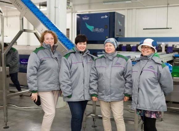 Сила трех: как украинские производители голубики создали первый отраслевой кооператив фото, иллюстрация