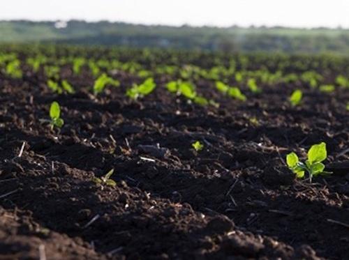 В Україні напередодні відкриття ринку землі перевірять стан грунту фото, ілюстрація