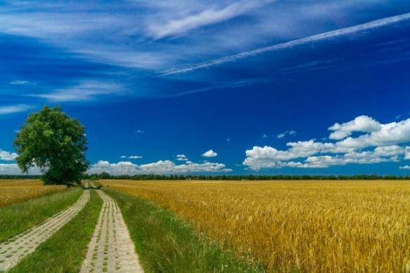 Тарас Висоцький обговорив із міжнародними партнерами питання розвитку сільських територій фото, ілюстрація