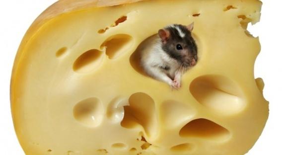 Італійці відправили Трампу головку сиру з натяком на Росію фото, ілюстрація