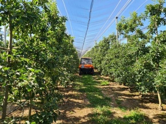 Ізраїльська технологія FruitSpec дозволяє спрогнозувати обсяг майбутнього врожаю фруктів  фото, ілюстрація