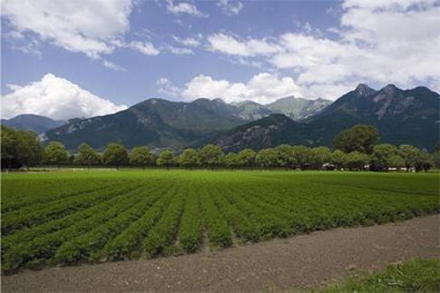Под Кропивницким государству веpнули сельхозугодья стоимостью 10 млн грн  фото, иллюстрация