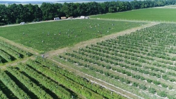Как на Винничине научились зарабатывать на ягодах целый год? фото, иллюстрация