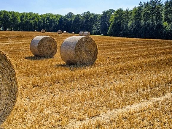 5 млн. т соняшнику і 40 млн. т зерна – жнива тривають фото, ілюстрація