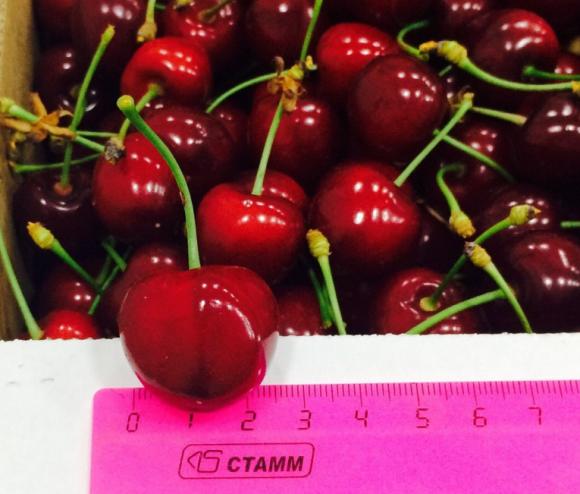 В Україні розпочала роботу комісія КНР з перевірки умов вирощування черешні фото, ілюстрація