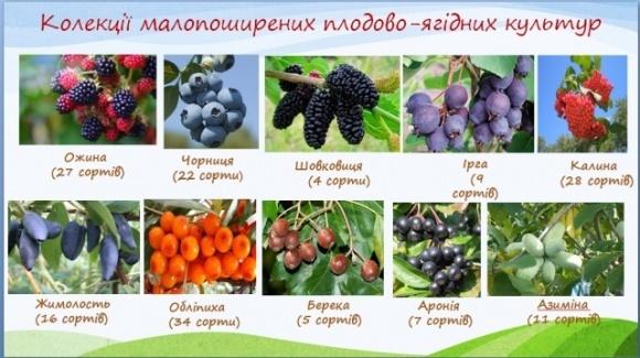 В Украине работают над созданием коллекции редких плодово-ягодных культур фото, иллюстрация