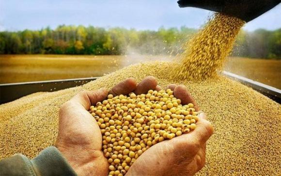 Украинский рынок сои: «невидимый» профицит в условиях напряженного баланса спроса/предложения фото, иллюстрация