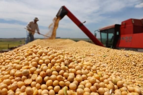 Херсонщина лидирует по урожайности сои и риса фото, иллюстрация