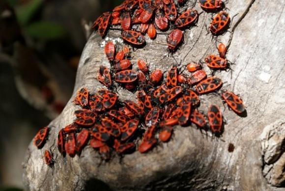 В Австралазії відкриють 20 заводів з виробництва комах для комбікормів фото, ілюстрація