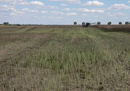 У 2019 році збільшиться валове виробництво пшениці, проса, гороху та ріпаку, – Юрій Лупенко фото, ілюстрація
