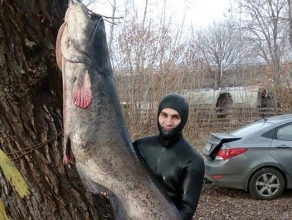 Держрибагентство розбереться з вбивством 90-кілограмового сома фото, ілюстрація