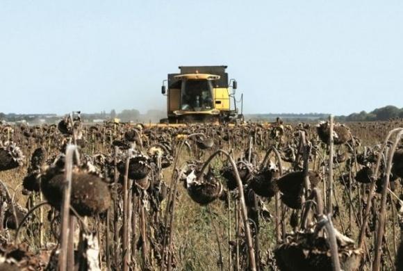 Аграрии Винницкой области завершают уборку подсолнечника фото, иллюстрация
