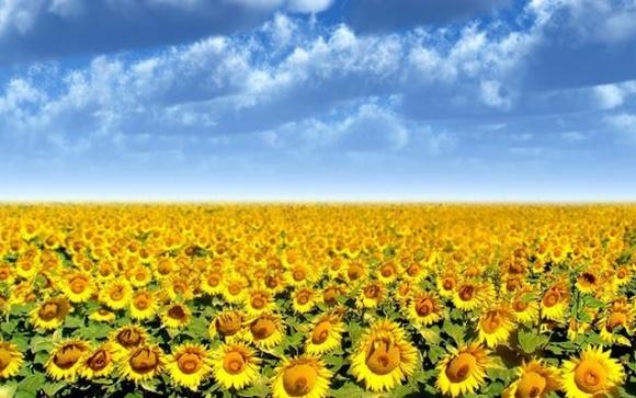 Один из разработчиков технологии Clearfield презентовал новый гербицид фото, иллюстрация