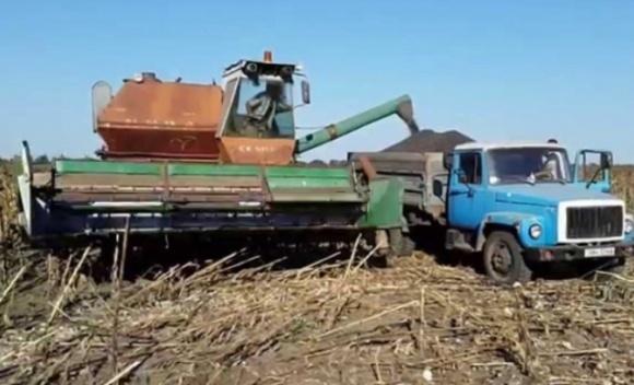 Украинские аграрии начали уборку подсолнечника фото, иллюстрация