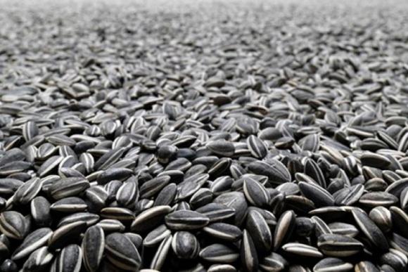Минэкономики Украины предлагает ввести до конца сезона нулевую квоту на экспорт семян подсолнечника фото, иллюстрация