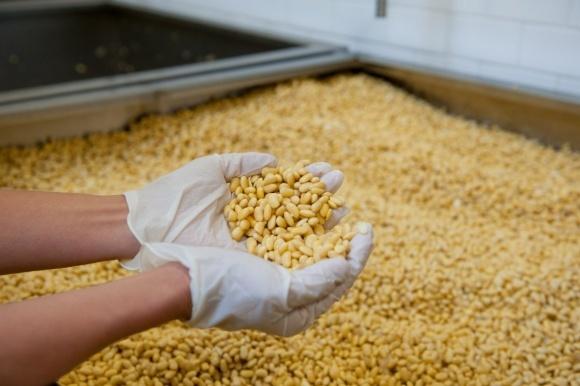 Украина посіла 8-е місце в світі з виробництва сої фото, ілюстрація