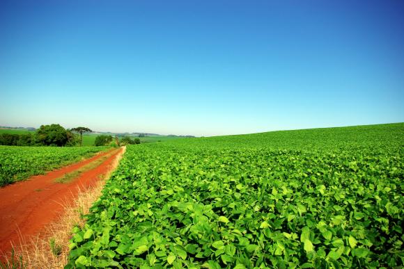 Бразильские фермеры готовы расширять свои посевы сои 15-й год подряд фото, иллюстрация