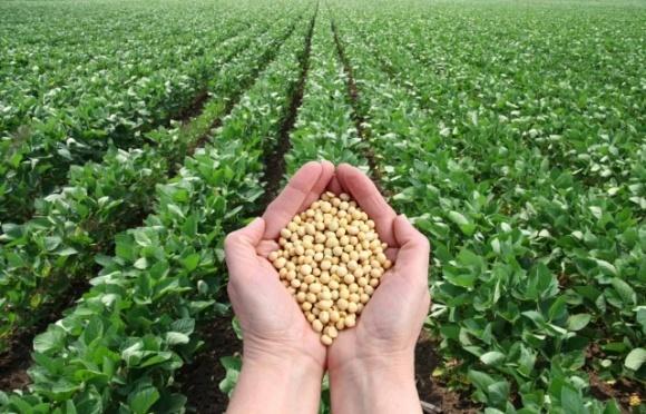 Прогноз АПК-Інформ: посівні площі сої в Україні можуть скоротитися до мінімального за 7 років показника фото, ілюстрація