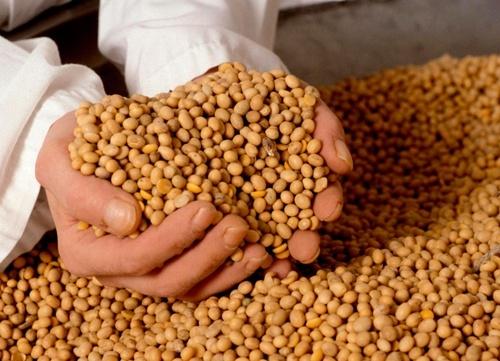 Зміна режиму оподаткування ПДВ експортних поставок соєвих бобів зумовила формування позитивних тенденцій у галузі, – Леонід Тулуш фото, ілюстрація
