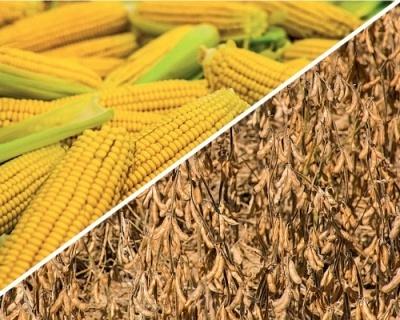 Перспективи врожаю кукурудзи та сої в Південній Америці покращуються фото, ілюстрація