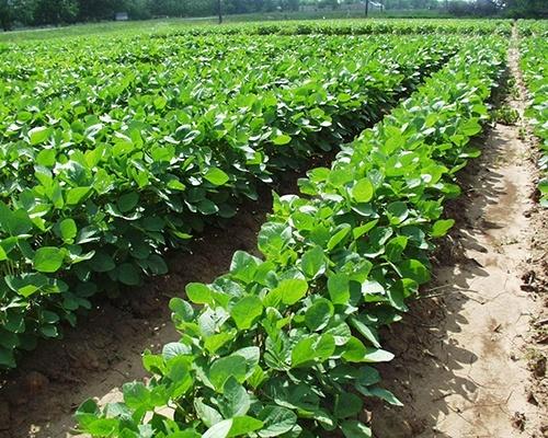 Вінниччина визначила пріоритетні напрямки розвитку органічного землеробства фото, ілюстрація