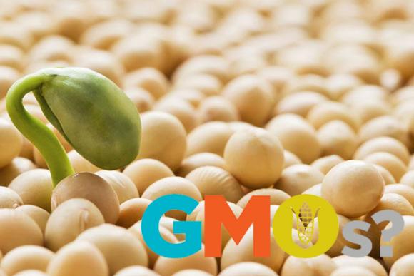 """В Україні ніякого контролю за вирощуванням ГМО-сої нема, - """"Арніка"""" фото, ілюстрація"""