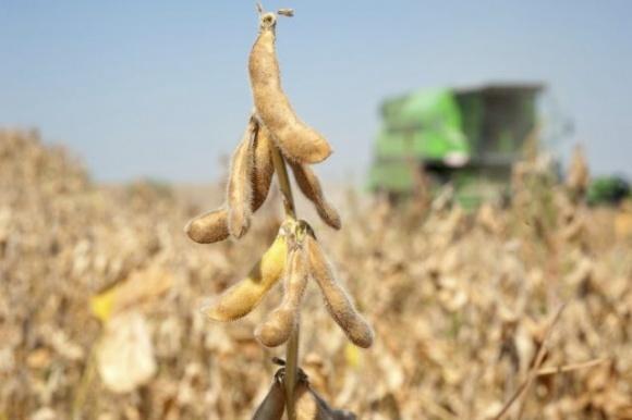 Урожайность сои в Запорожье на 40% выше средней по Украине фото, иллюстрация
