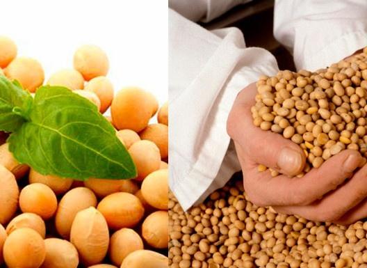 «Агропродсервіс» принципово вирощує сорти сої без ГМО фото, ілюстрація