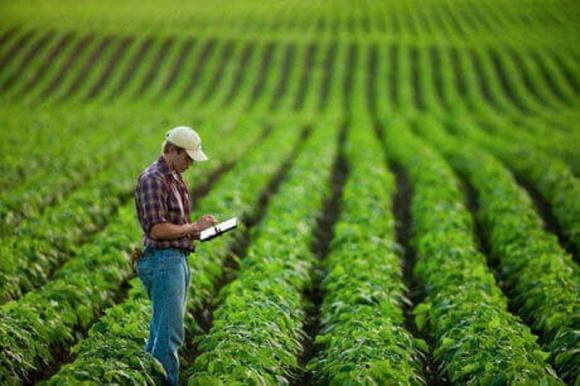 Агролайфак: як підвищити врожайність сої та кукурудзи? фото, ілюстрація