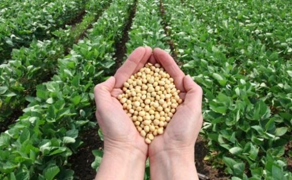 В Аргентине разочарованы результатом выращивания ГМ-сои фото, иллюстрация