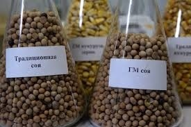 Перші українські господарства проходять сертифікацію як виробники не-ГМ сої фото, ілюстрація