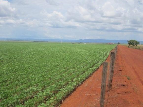 Прогноз валового сбора сои в Бразилии повышен, а посевная площадь достигла исторического рекорда фото, иллюстрация