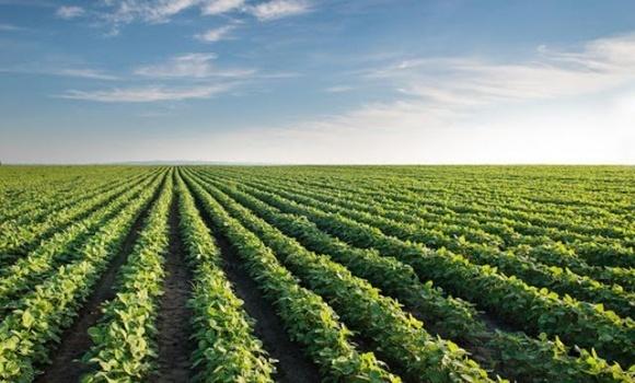 На Прикарпатье возрастают площади под выращивание сои фото, иллюстрация